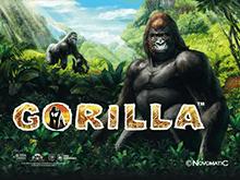 Игровой автомат Вулкан Gorilla