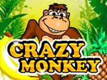Играть в казино Вулкан на деньги в автомат Crazy Monkey